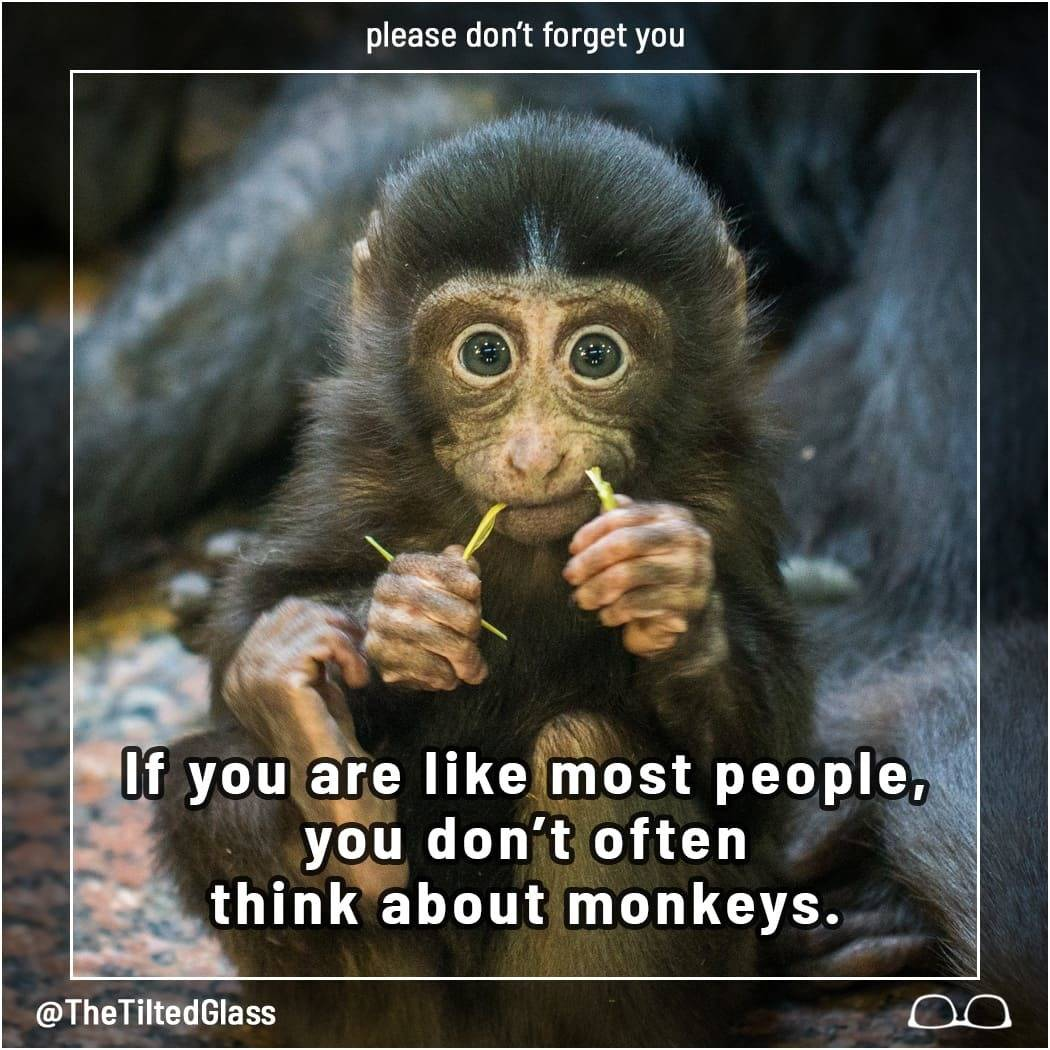 If you are like most people, you don't often think about monkeys