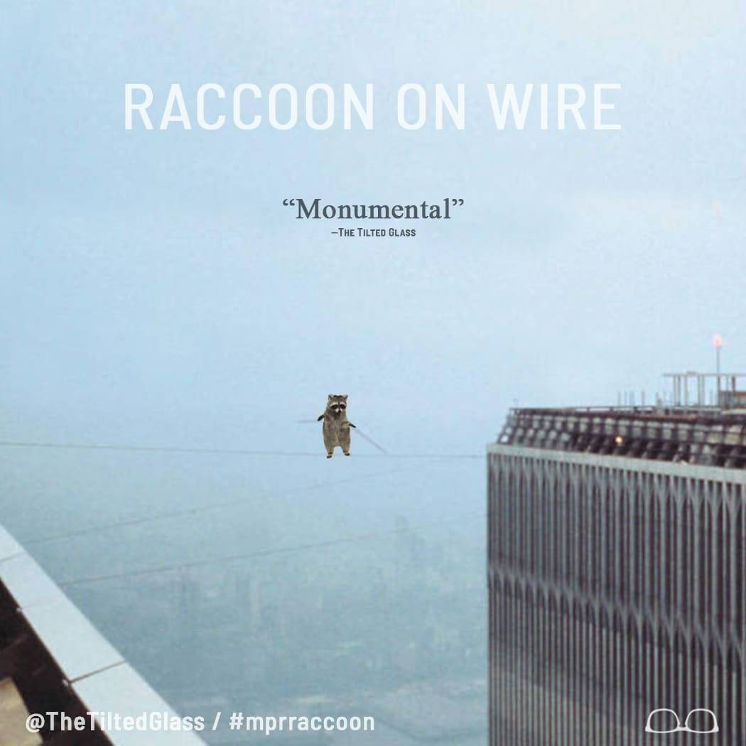 Raccoon on Wire