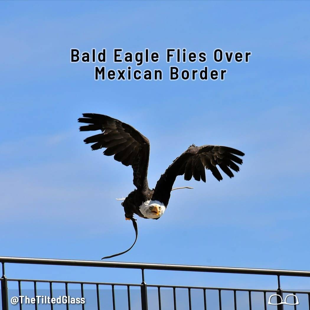 Bald Eagle Flies Over Mexican Border