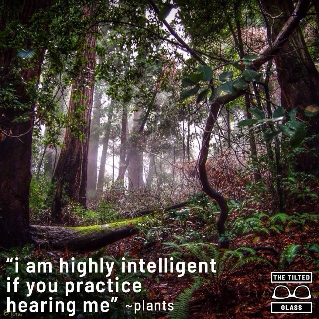 I am highly intelligent if you practice hearing me ~ plants