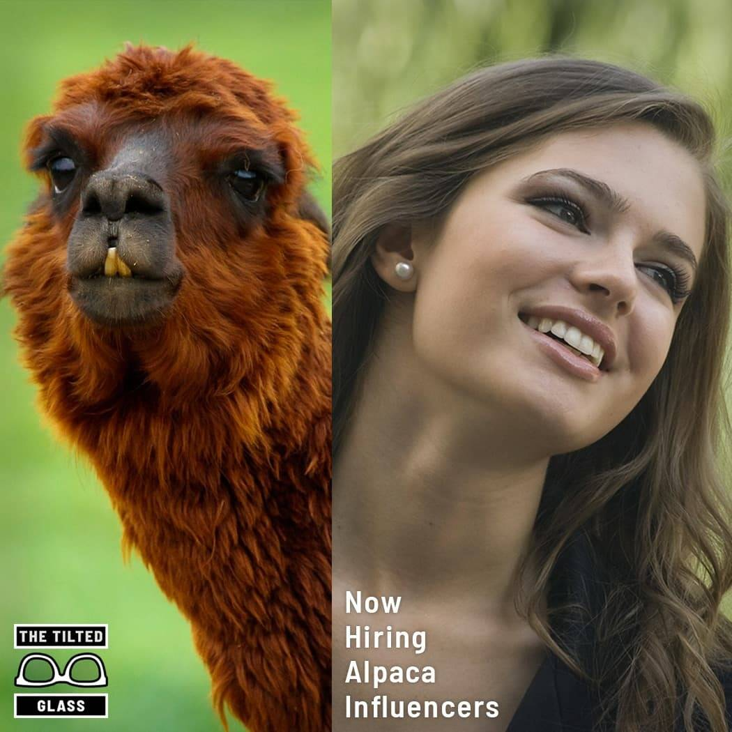 Now Hiring Alpaca Influencers