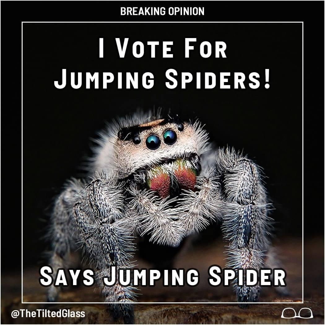 I Vote for Jumping Spiders! Says Jumping Spider